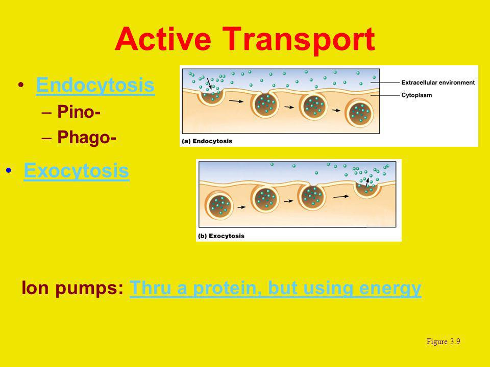 Active Transport Endocytosis –Pino- –Phago- Exocytosis Figure 3.9 Ion pumps: Thru a protein, but using energyThru a protein, but using energy