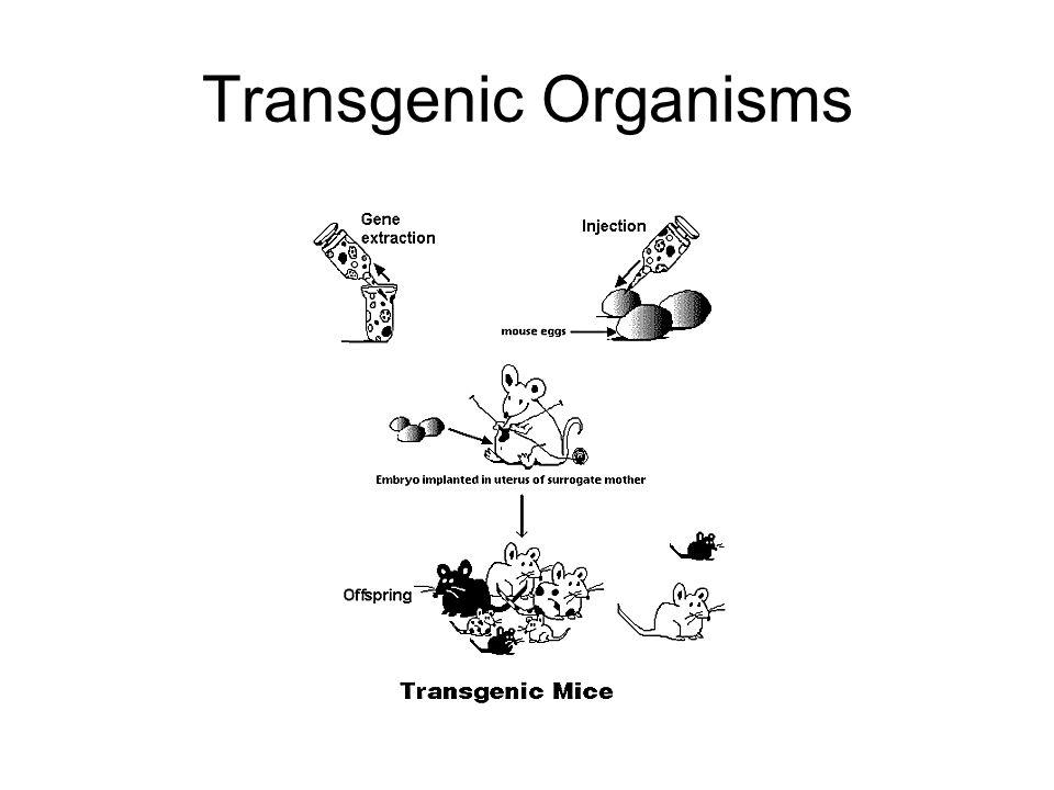 Transgenic Clones Are Here
