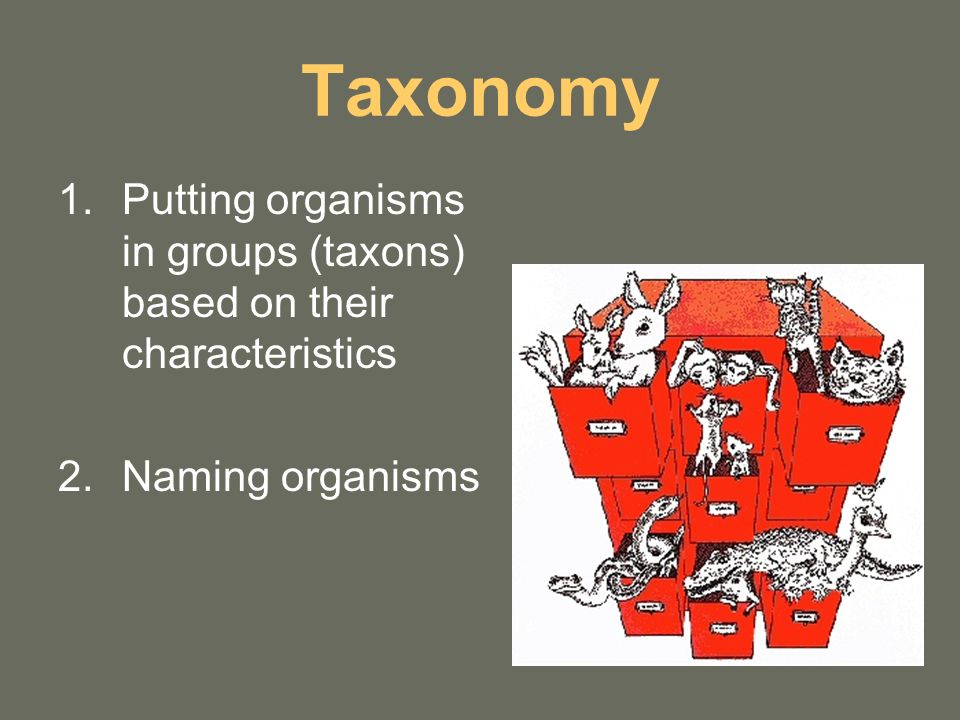 Taxonomy 1.Putting organisms in groups (taxons) based on their characteristics 2.Naming organisms