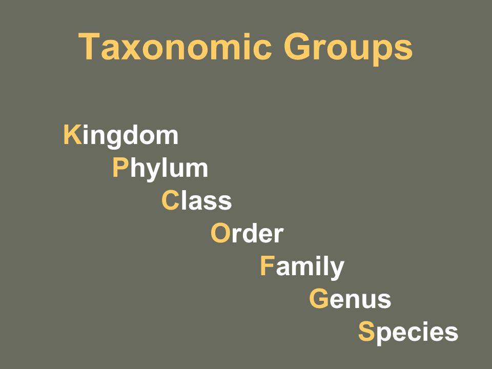Taxonomic Groups Kingdom Phylum Class Order Family Genus Species