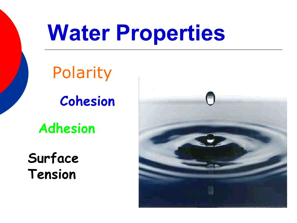 Water Properties Polarity Cohesion Adhesion Surface Tension