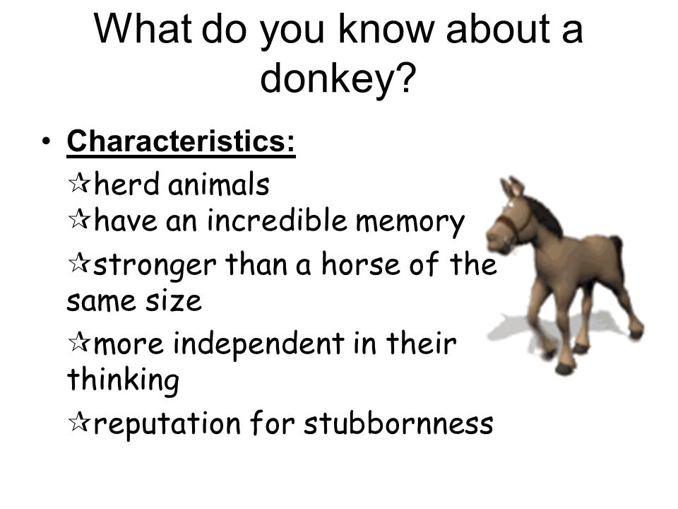 What do you know about a donkey.