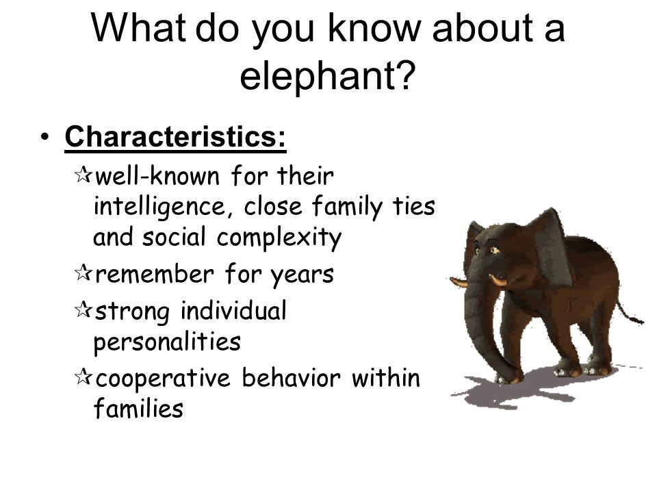 What do you know about a elephant.