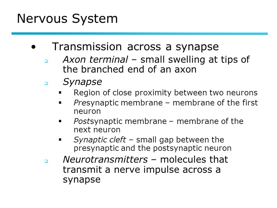Nervous System Transmission across a synapse Axon terminal – small swelling at tips of the branched end of an axon Synapse Region of close proximity between two neurons Presynaptic membrane – membrane of the first neuron Postsynaptic membrane – membrane of the next neuron Synaptic cleft – small gap between the presynaptic and the postsynaptic neuron Neurotransmitters – molecules that transmit a nerve impulse across a synapse