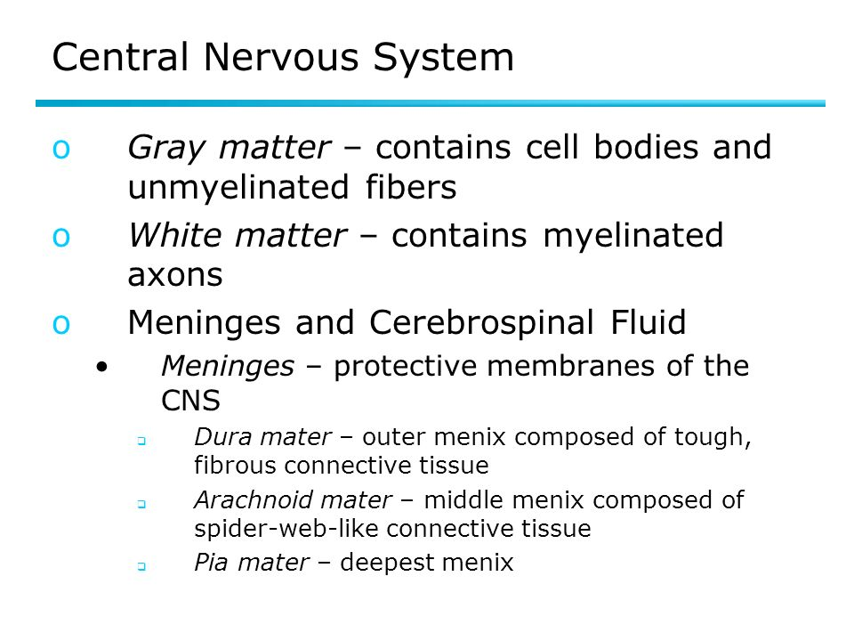 Central Nervous System oGray matter – contains cell bodies and unmyelinated fibers oWhite matter – contains myelinated axons oMeninges and Cerebrospinal Fluid Meninges – protective membranes of the CNS Dura mater – outer menix composed of tough, fibrous connective tissue Arachnoid mater – middle menix composed of spider-web-like connective tissue Pia mater – deepest menix