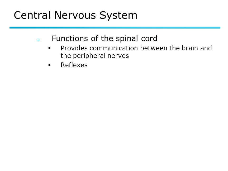 Central Nervous System Functions of the spinal cord Provides communication between the brain and the peripheral nerves Reflexes