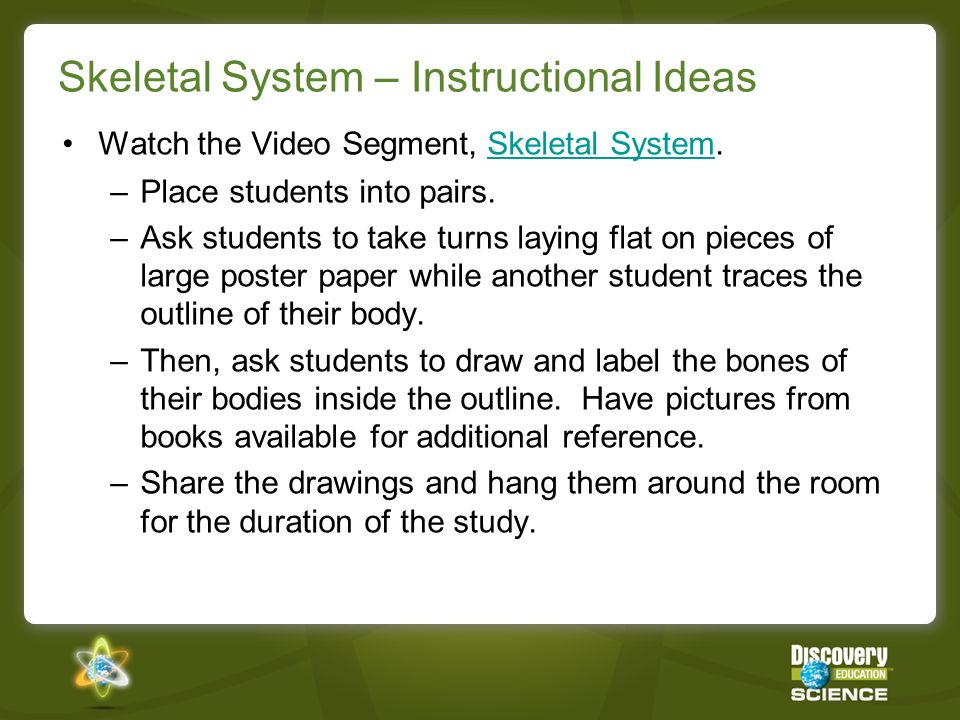Skeletal System – Instructional Ideas Watch the Video Segment, Skeletal System.Skeletal System –Place students into pairs.