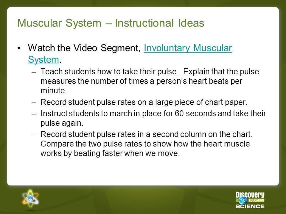 Muscular System – Instructional Ideas Watch the Video Segment, Involuntary Muscular System.Involuntary Muscular System –Teach students how to take the