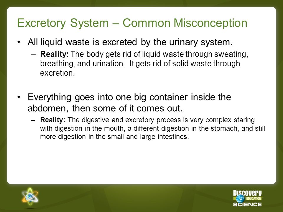Excretory System – Using DE Science Content When you close this presentation, you can review the following recommended resources for the Excretory System.
