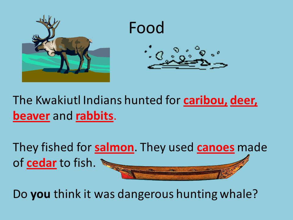 Food The Kwakiutl Indians hunted for caribou, deer, beaver and rabbits. They fished for salmon. They used canoes made of cedar to fish. Do you think i