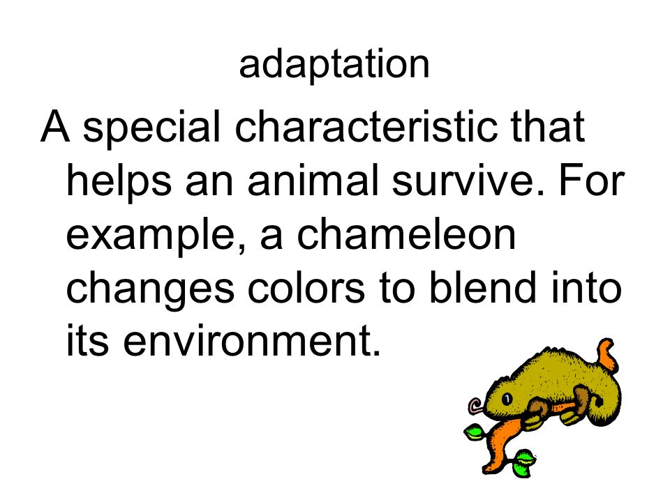 adaptation A special characteristic that helps an animal survive. For example, a chameleon changes colors to blend into its environment.
