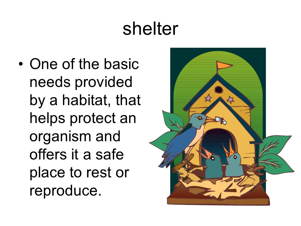 shelter One of the basic needs provided by a habitat, that helps protect an organism and offers it a safe place to rest or reproduce.
