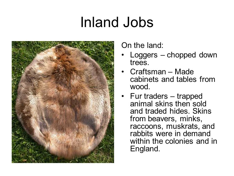 Inland Jobs On the land: Loggers – chopped down trees. Craftsman – Made cabinets and tables from wood. Fur traders – trapped animal skins then sold an