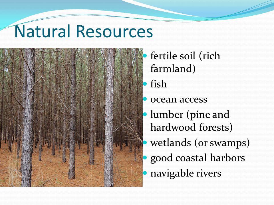 Natural Resources fertile soil (rich farmland) fish ocean access lumber (pine and hardwood forests) wetlands (or swamps) good coastal harbors navigabl