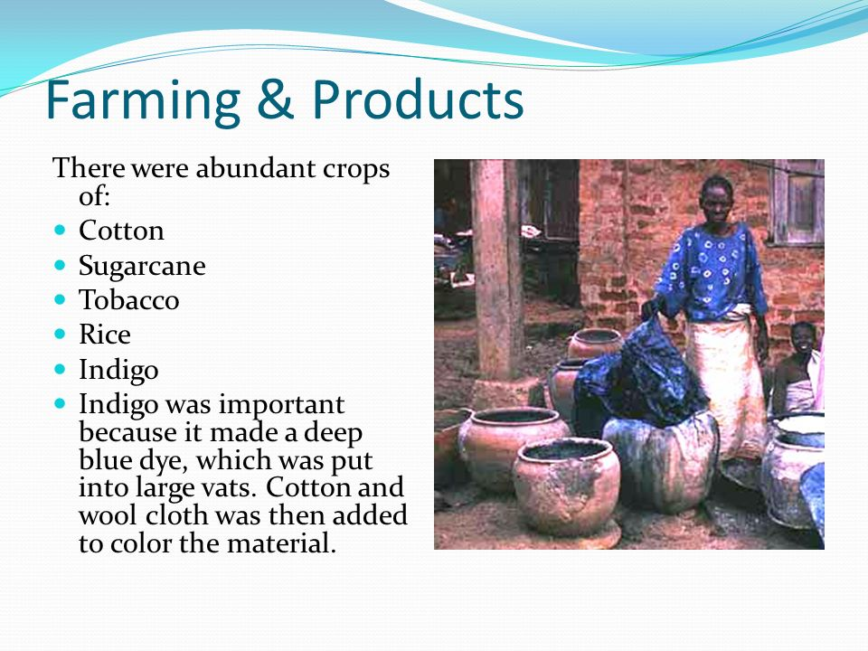 Farming & Products There were abundant crops of: Cotton Sugarcane Tobacco Rice Indigo Indigo was important because it made a deep blue dye, which was