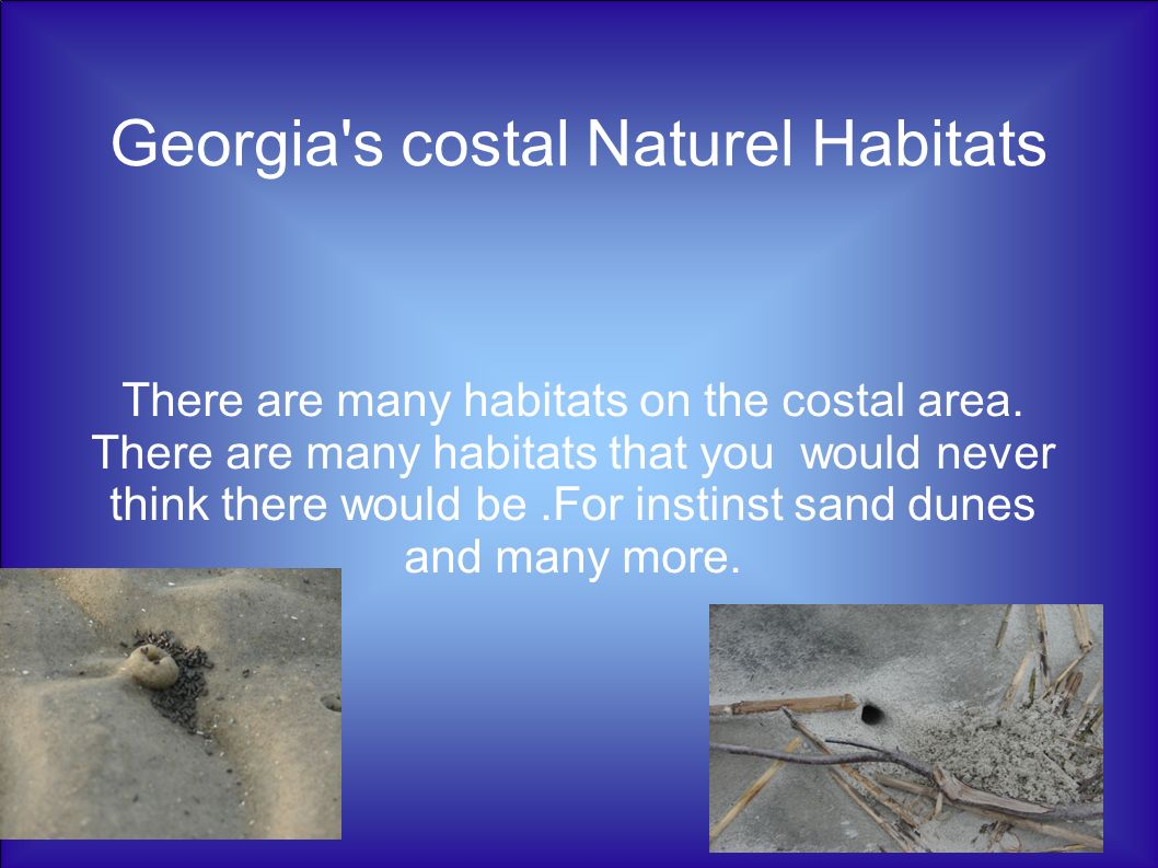 Georgia's costal Naturel Habitats There are many habitats on the costal area. There are many habitats that you would never think there would be.For in