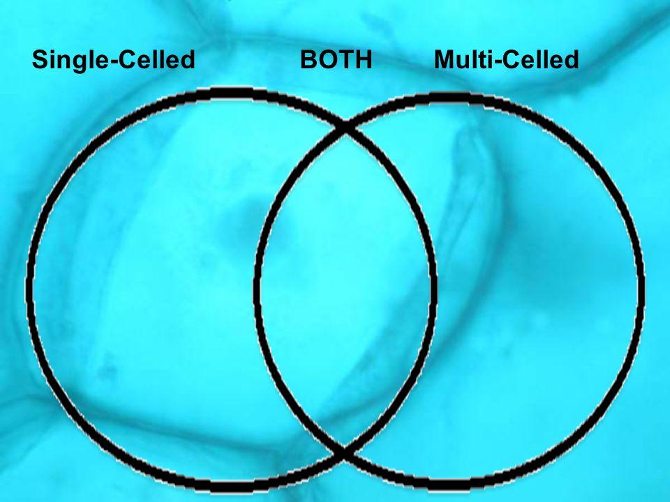 Single-CelledBOTHMulti-Celled