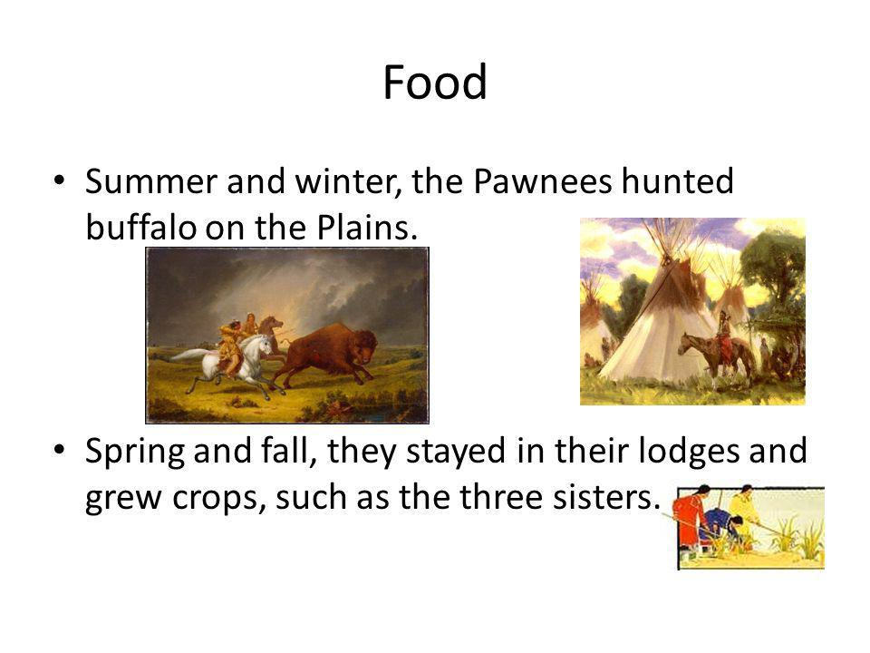 Food Summer and winter, the Pawnees hunted buffalo on the Plains. Spring and fall, they stayed in their lodges and grew crops, such as the three siste