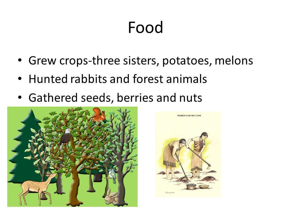Food Grew crops-three sisters, potatoes, melons Hunted rabbits and forest animals Gathered seeds, berries and nuts