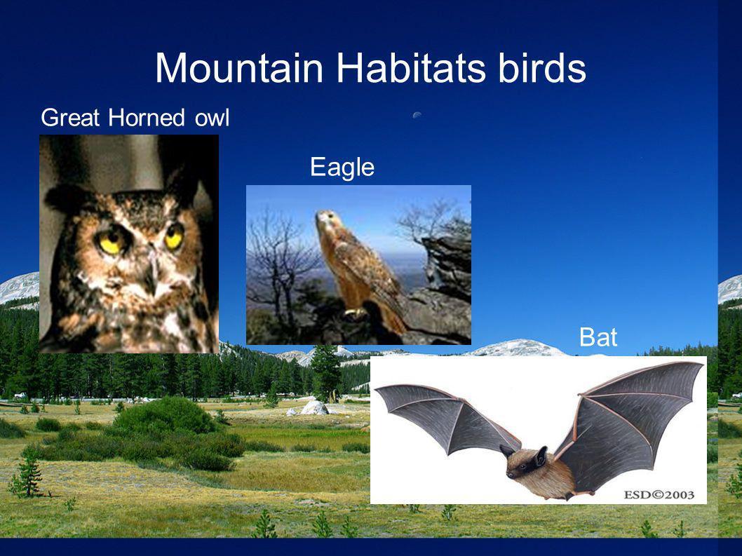 Mountain Habitats birds Great Horned owl Bat Eagle