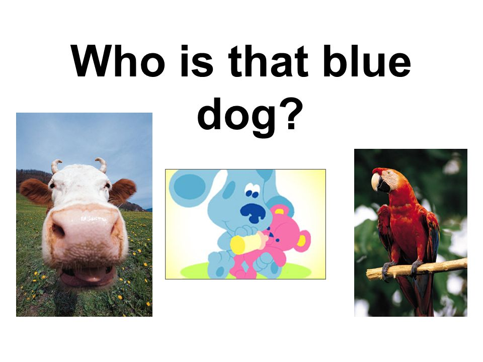 Who is that blue dog?