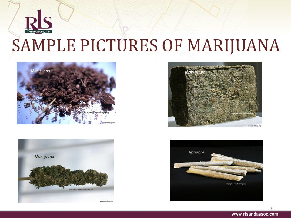 SAMPLE PICTURES OF MARIJUANA 30