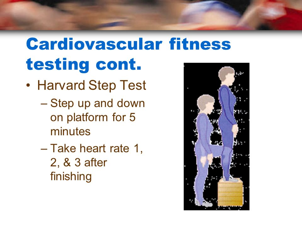 Cardiovascular fitness testing cont. Harvard Step Test –Step up and down on platform for 5 minutes –Take heart rate 1, 2, & 3 after finishing
