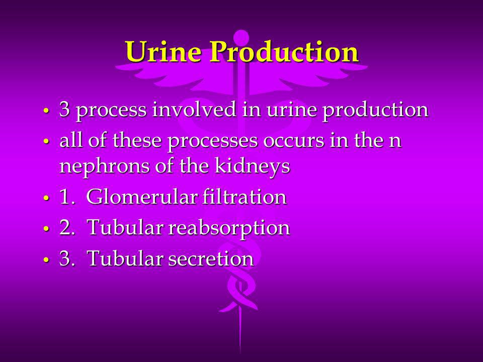 Urine Production 3 process involved in urine production 3 process involved in urine production all of these processes occurs in the n nephrons of the kidneys all of these processes occurs in the n nephrons of the kidneys 1.