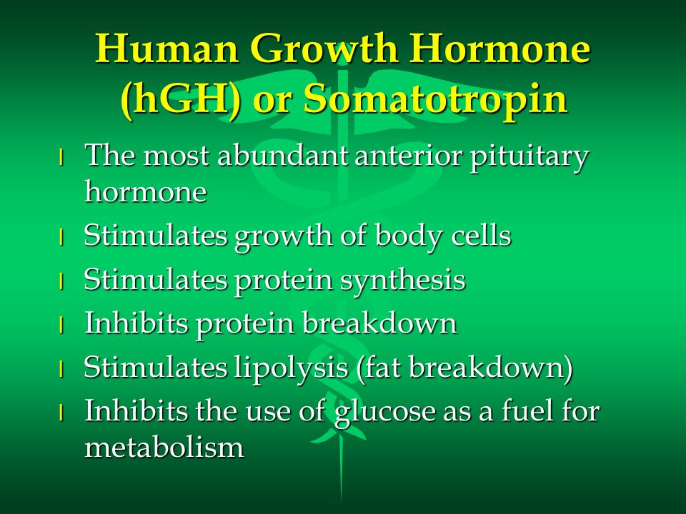 Human Growth Hormone (hGH) or Somatotropin l The most abundant anterior pituitary hormone l Stimulates growth of body cells l Stimulates protein synth