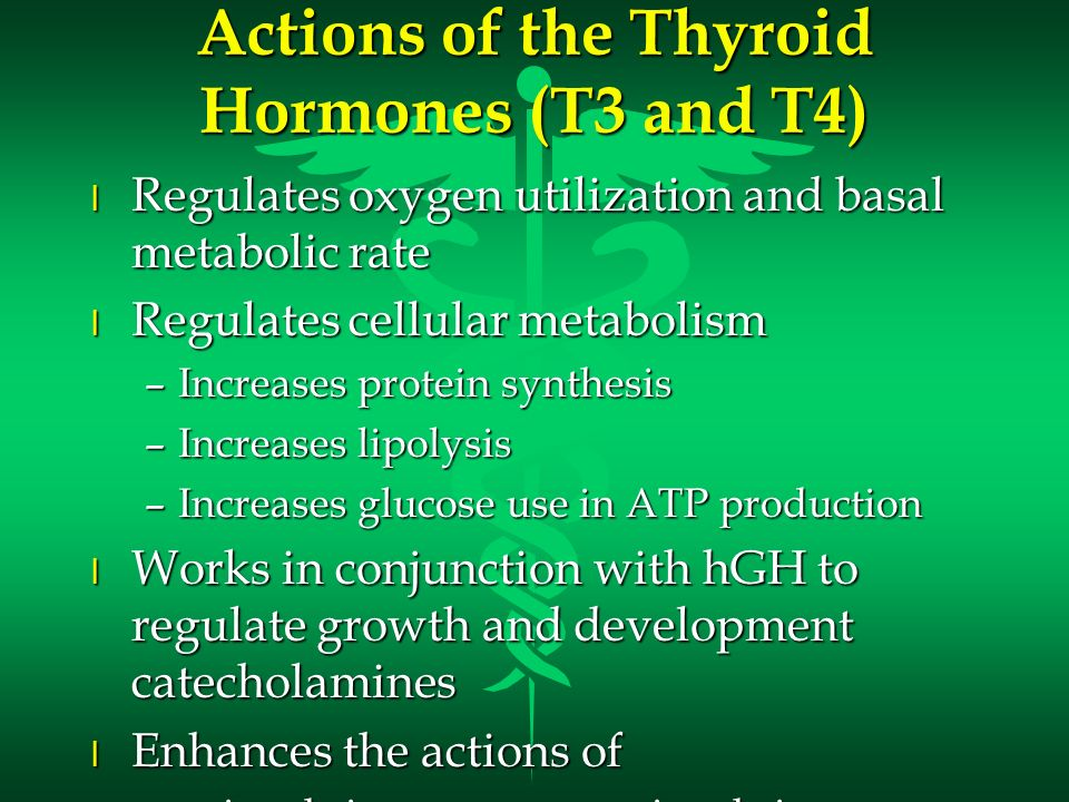 Actions of the Thyroid Hormones (T3 and T4) l Regulates oxygen utilization and basal metabolic rate l Regulates cellular metabolism –Increases protein