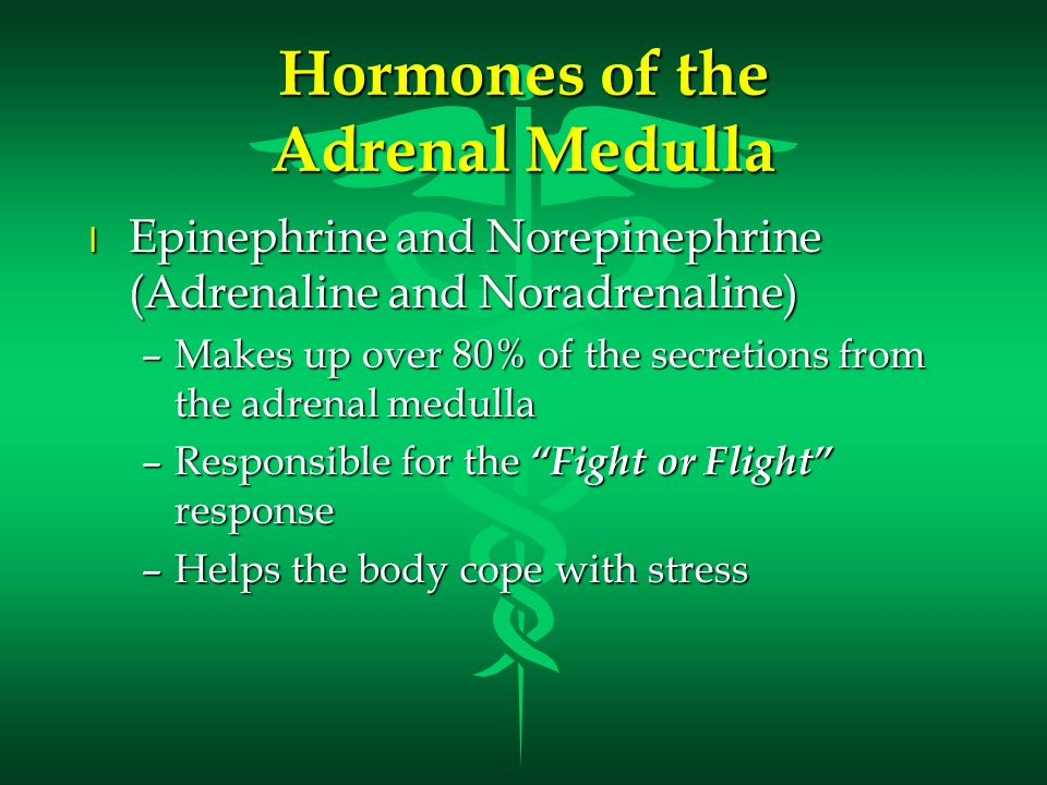 Hormones of the Adrenal Medulla l Epinephrine and Norepinephrine (Adrenaline and Noradrenaline) –Makes up over 80% of the secretions from the adrenal