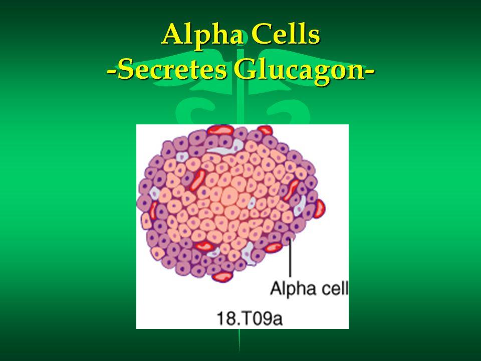 Alpha Cells -Secretes Glucagon-