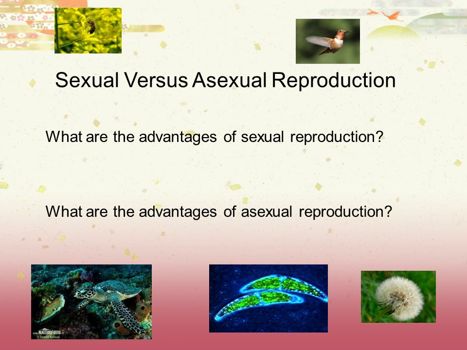 Sexual Versus Asexual Reproduction What are the advantages of sexual reproduction? What are the advantages of asexual reproduction?