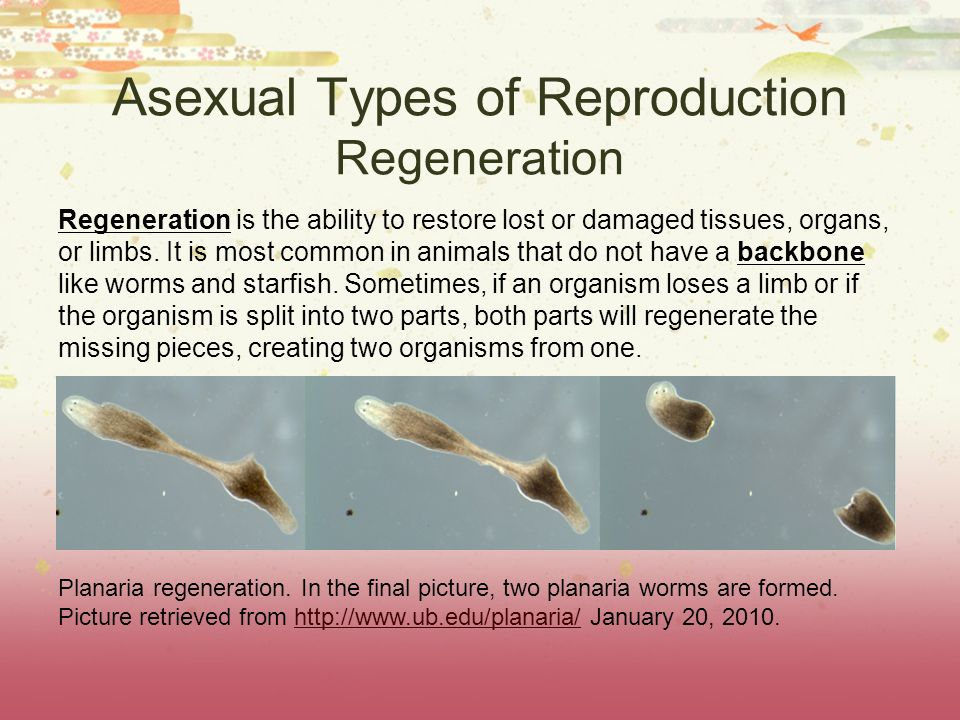Asexual Types of Reproduction Regeneration Regeneration is the ability to restore lost or damaged tissues, organs, or limbs. It is most common in anim