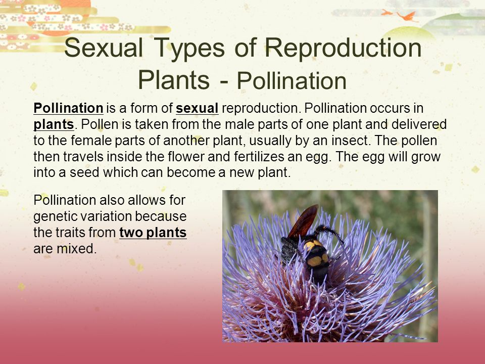 Sexual Types of Reproduction Plants - Pollination Pollination is a form of sexual reproduction. Pollination occurs in plants. Pollen is taken from the