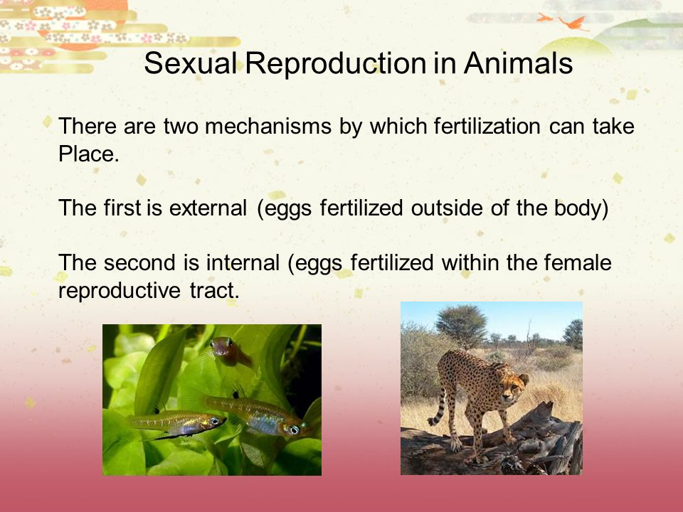 Types of Reproduction Sexual vs.Asexual Take a look at the table below.