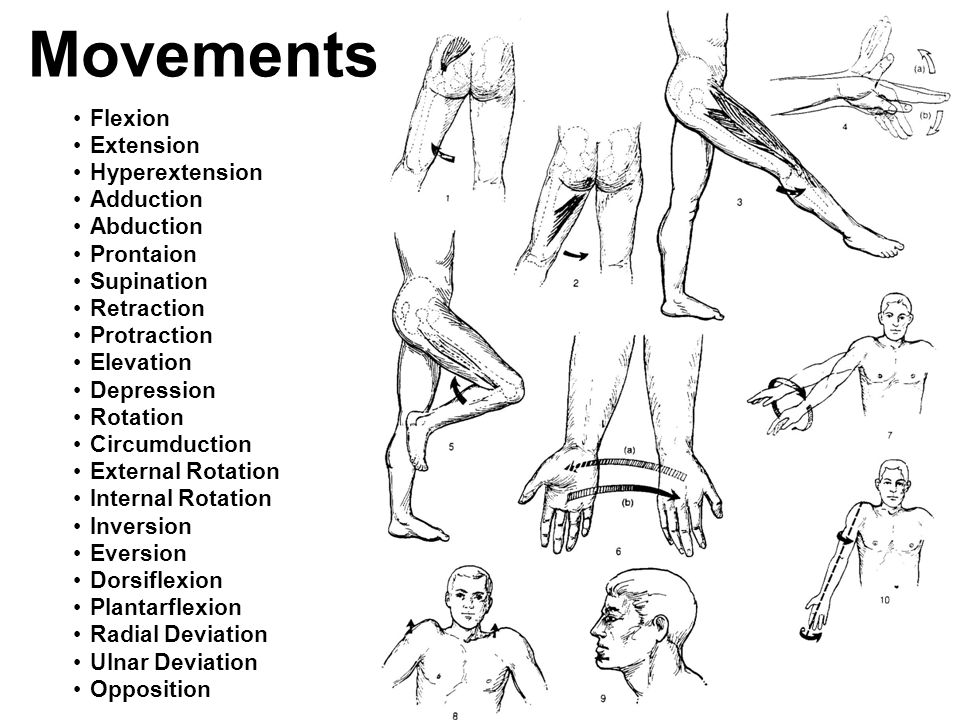 Movements Flexion Extension Hyperextension Adduction Abduction Prontaion Supination Retraction Protraction Elevation Depression Rotation Circumduction
