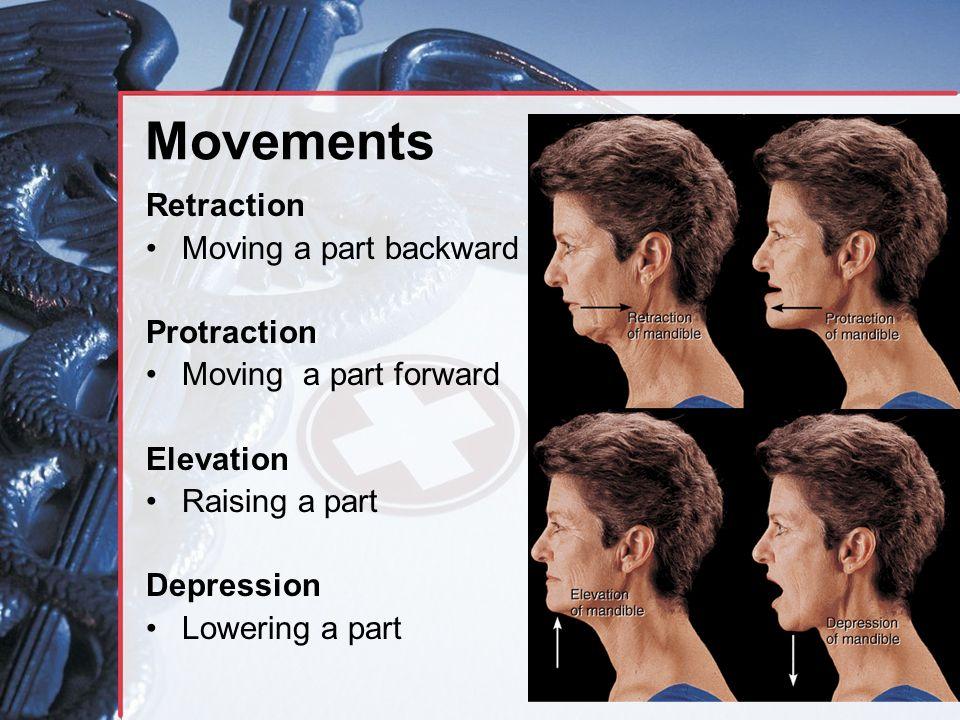 Movements Retraction Moving a part backward Protraction Moving a part forward Elevation Raising a part Depression Lowering a part