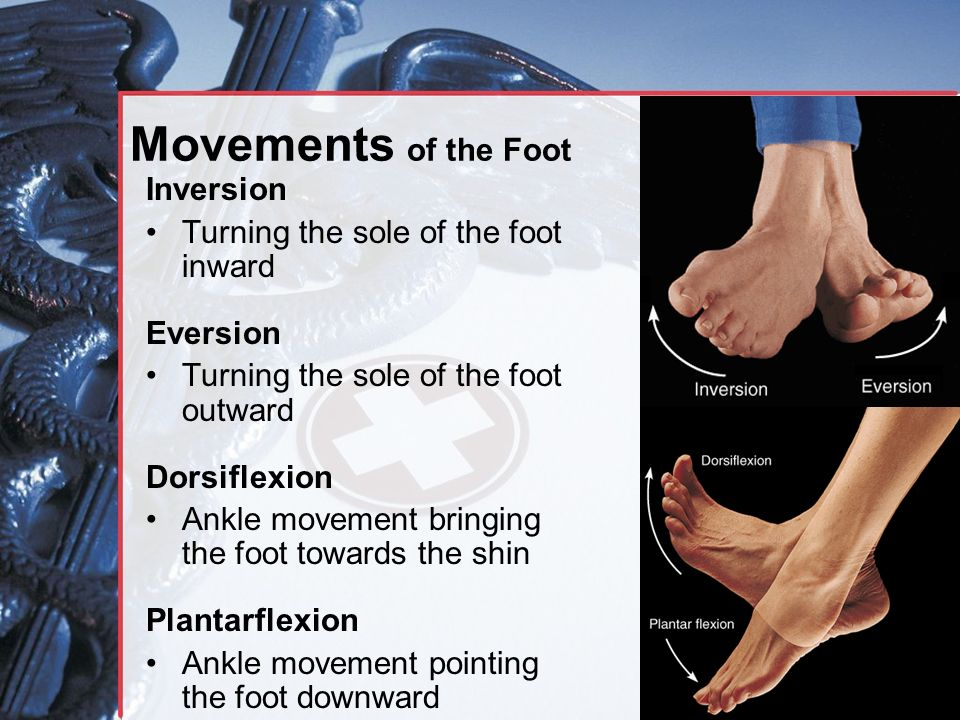 Movements of the Foot Inversion Turning the sole of the foot inward Eversion Turning the sole of the foot outward Dorsiflexion Ankle movement bringing