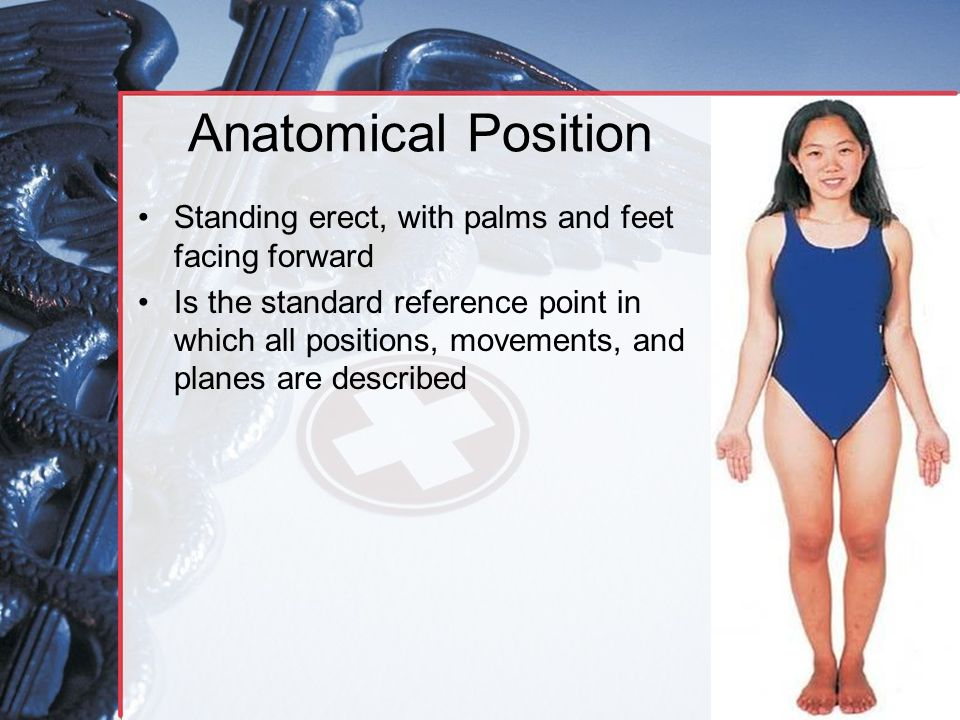 Anatomical Position Standing erect, with palms and feet facing forward Is the standard reference point in which all positions, movements, and planes a