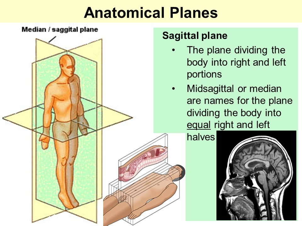 Humans are bipedal, we walk on two legs, therefore our Ventral side / Dorsal side flips at our lower extremities.