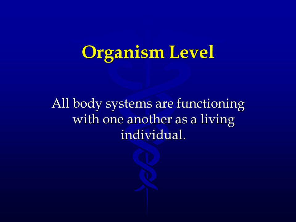 Put the levels of organization in order A.) chemical, cellular, organism, tissue, system, organ B.) organ, system, cellular, tissue, chemical, tissue C.) chemical, cellular, tissue, organ, system, organism D.) system, tissue, chemical, organ, organism, cellular