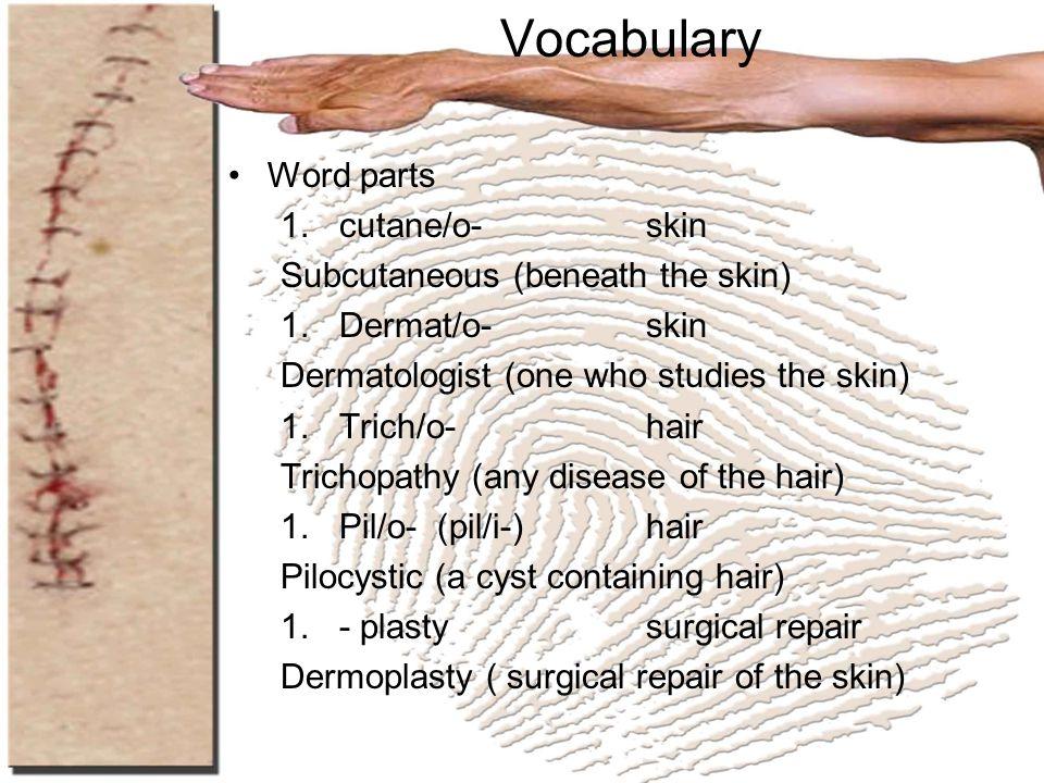 Vocabulary Word parts 1.cutane/o-skin Subcutaneous (beneath the skin) 1.Dermat/o-skin Dermatologist (one who studies the skin) 1.Trich/o-hair Trichopa