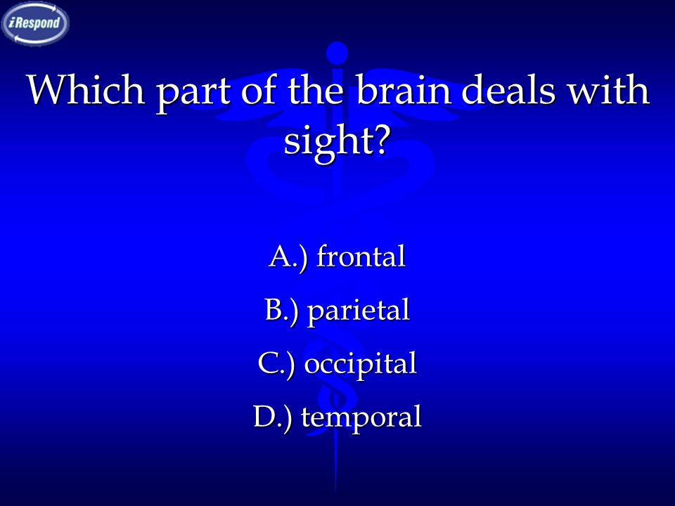 Which part of the brain deals with sight? A.) frontal B.) parietal C.) occipital D.) temporal