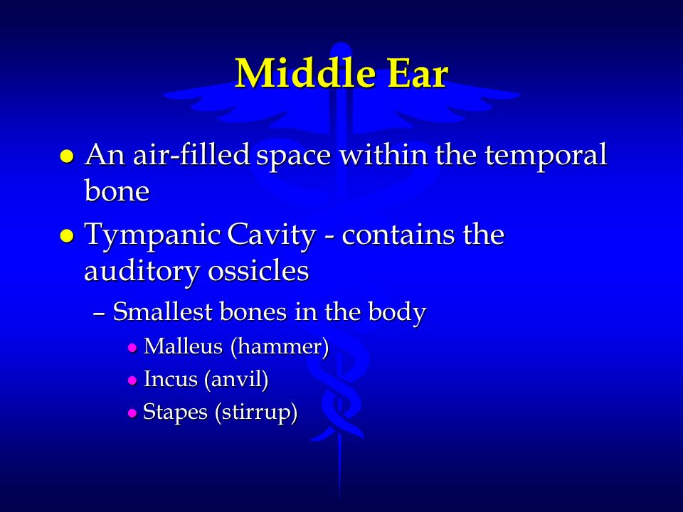 l An air-filled space within the temporal bone l Tympanic Cavity - contains the auditory ossicles –Smallest bones in the body l Malleus (hammer) l Inc