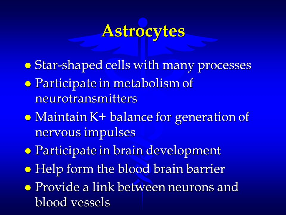 Astrocytes l Star-shaped cells with many processes l Participate in metabolism of neurotransmitters l Maintain K+ balance for generation of nervous im
