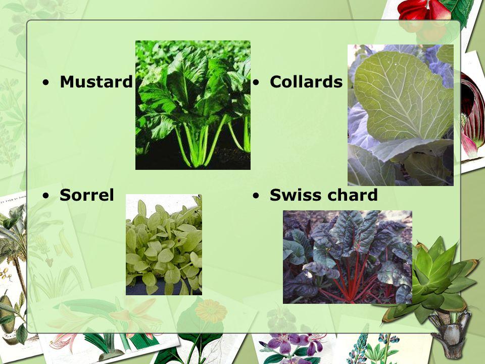 Greens Lettuce Mustard Collards Sorrel Spinach Swiss chard Turnip greens