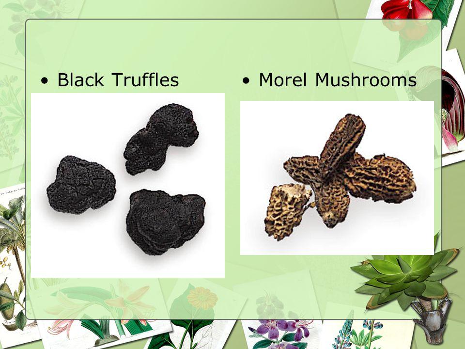 Mushrooms and Truffles Mushrooms