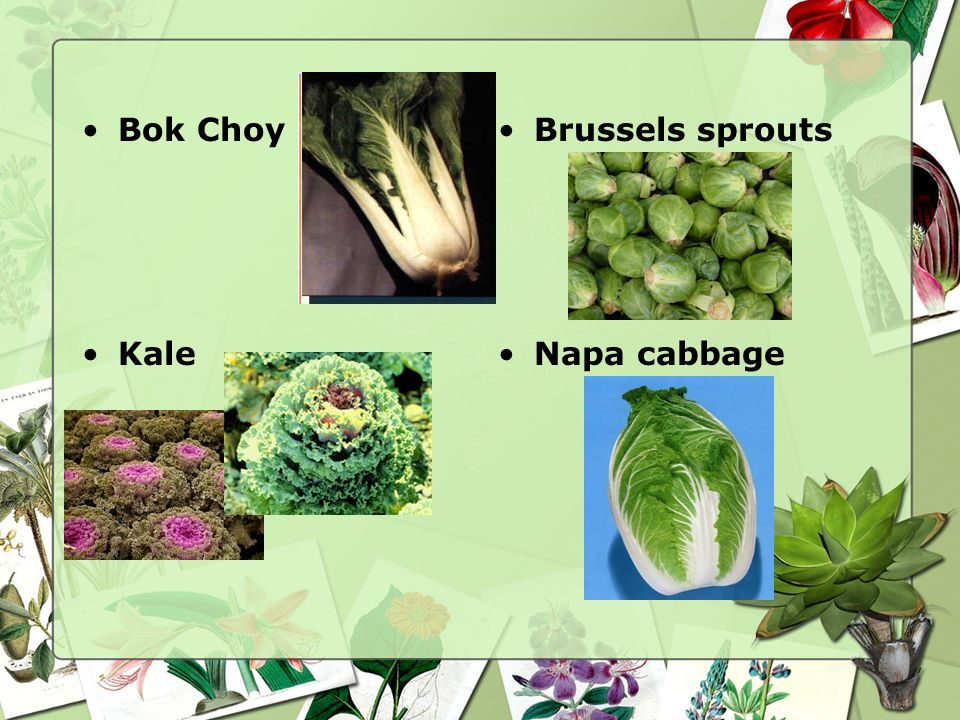 Cabbages This Family refers to a large number of vegetables used for their heads or flowers –Bok ChoyBroccoli –Brussels sproutsCauliflower –Head cabba