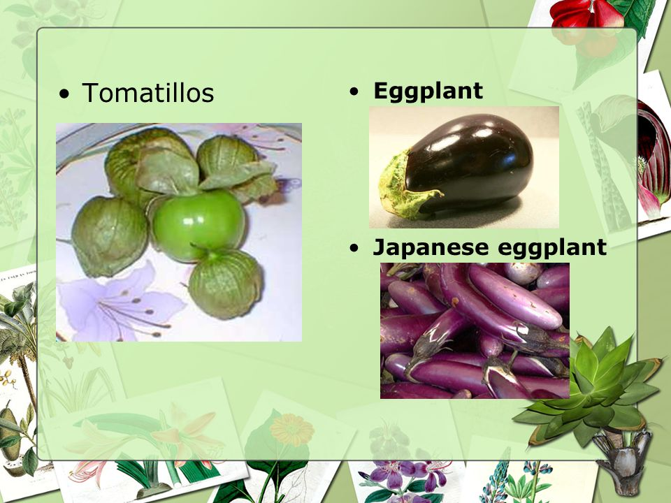 Fruit-Vegetables Avocados Eggplants –Asian and Western Peppers –Sweet peppers –Hot peppers Tomatillos Tomatoes –Sun-dried tomatoes